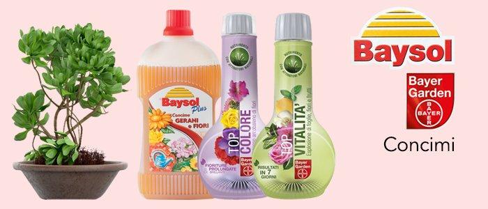 Bayer Baysol Concimi per piante e fiori
